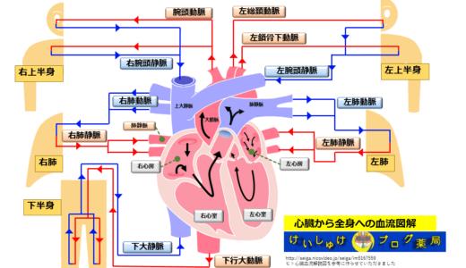 薬剤師が心臓の生理学をイラストで学ぶ①血流編