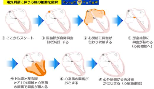刺激伝導系と心臓の拍動をリンクさせて理解する