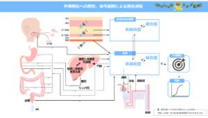 作用部位への剤形,投与経路による到達過程